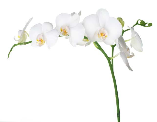 Цветы и растения - 213 | Wall-Style