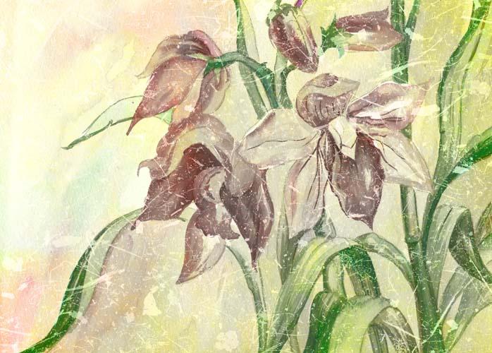 Цветы и растения - 217 | Wall-Style