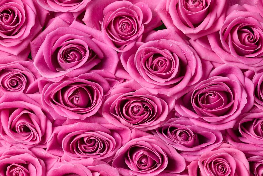 Цветы и растения - 223 | Wall-Style