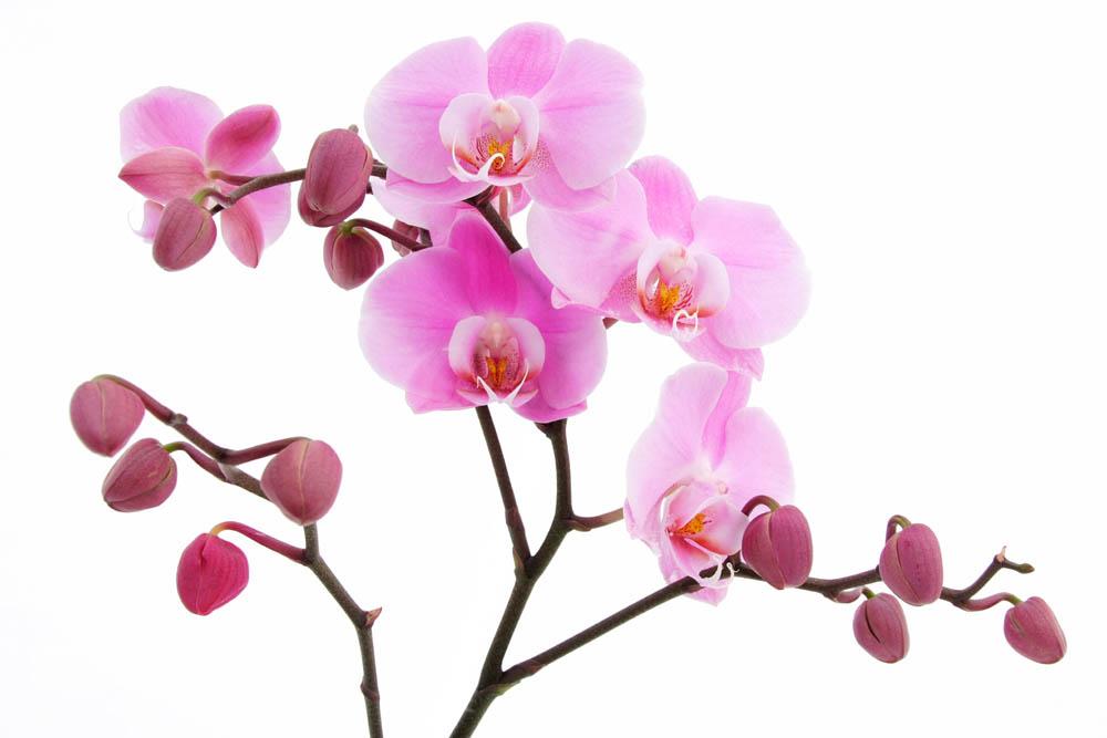 Цветы и растения - 224 | Wall-Style