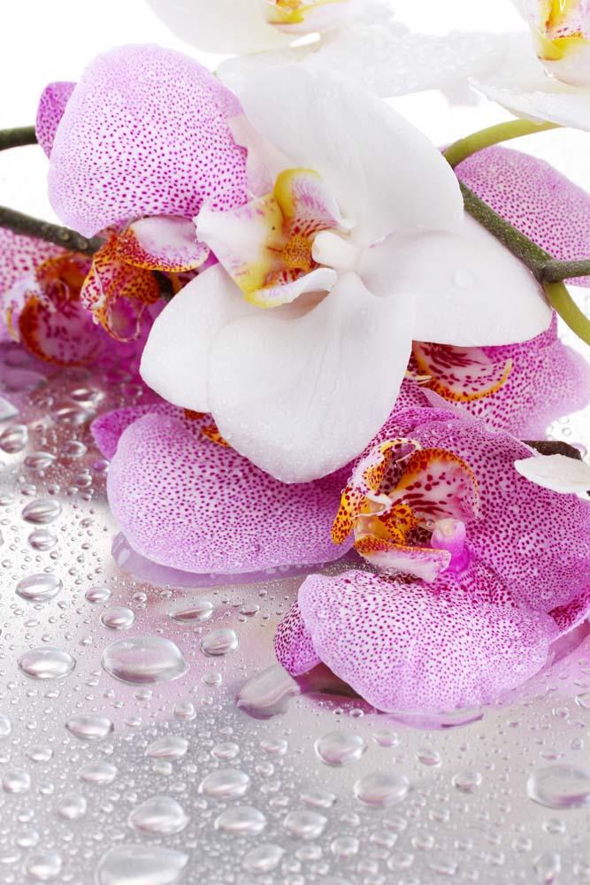 Орхидеи и капельки воды
