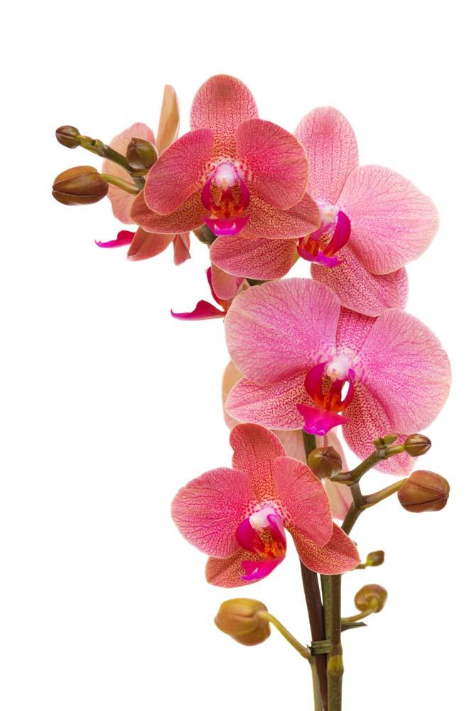 Цветы и растения - 42 | Wall-Style