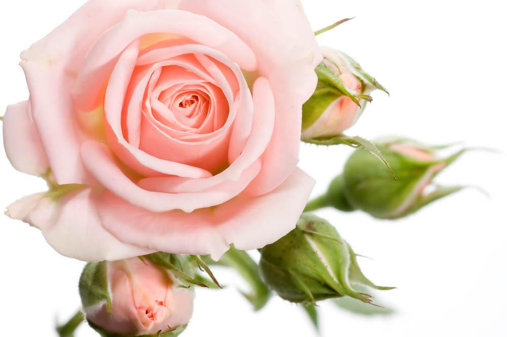 Цветы и растения - 225 | Wall-Style