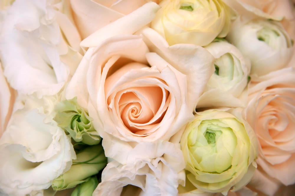 Цветы и растения - 226 | Wall-Style