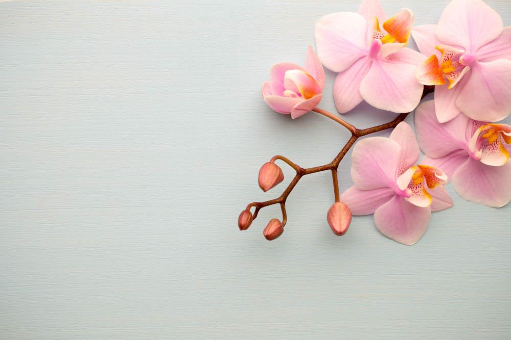 Цветы и растения - 15 | Wall-Style