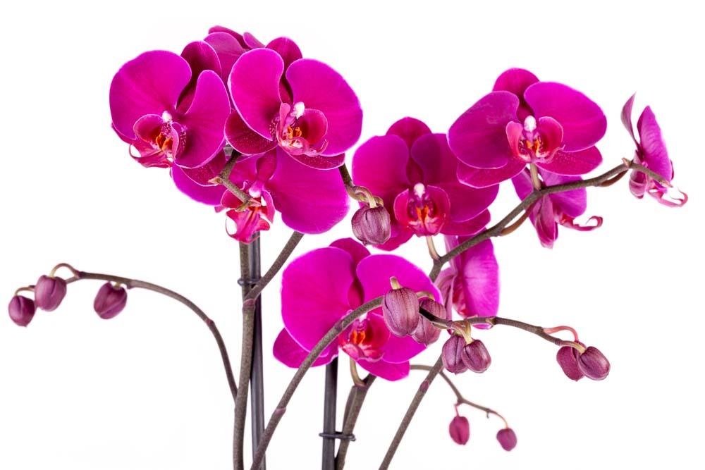 Цветы и растения - 46 | Wall-Style