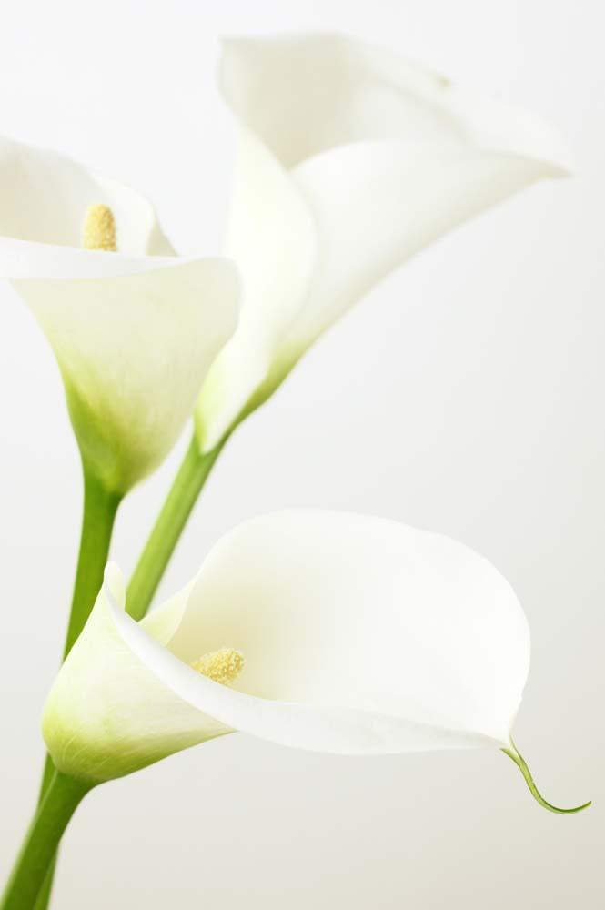 Цветы и растения - 32 | Wall-Style