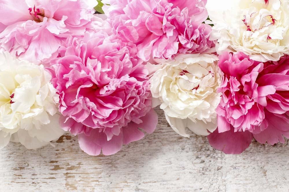 Цветы и растения - 19 | Wall-Style