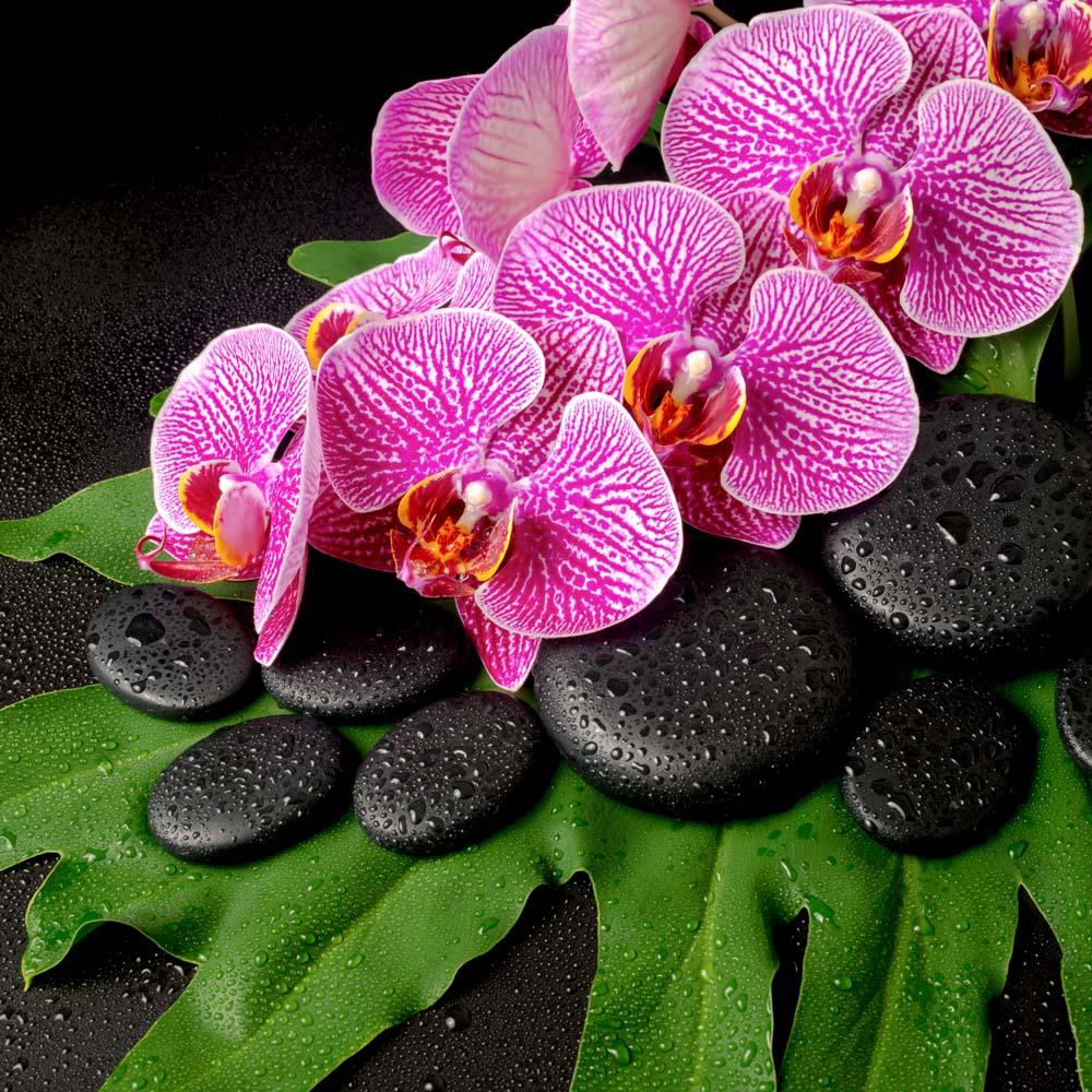 Цветы и растения - 14 | Wall-Style