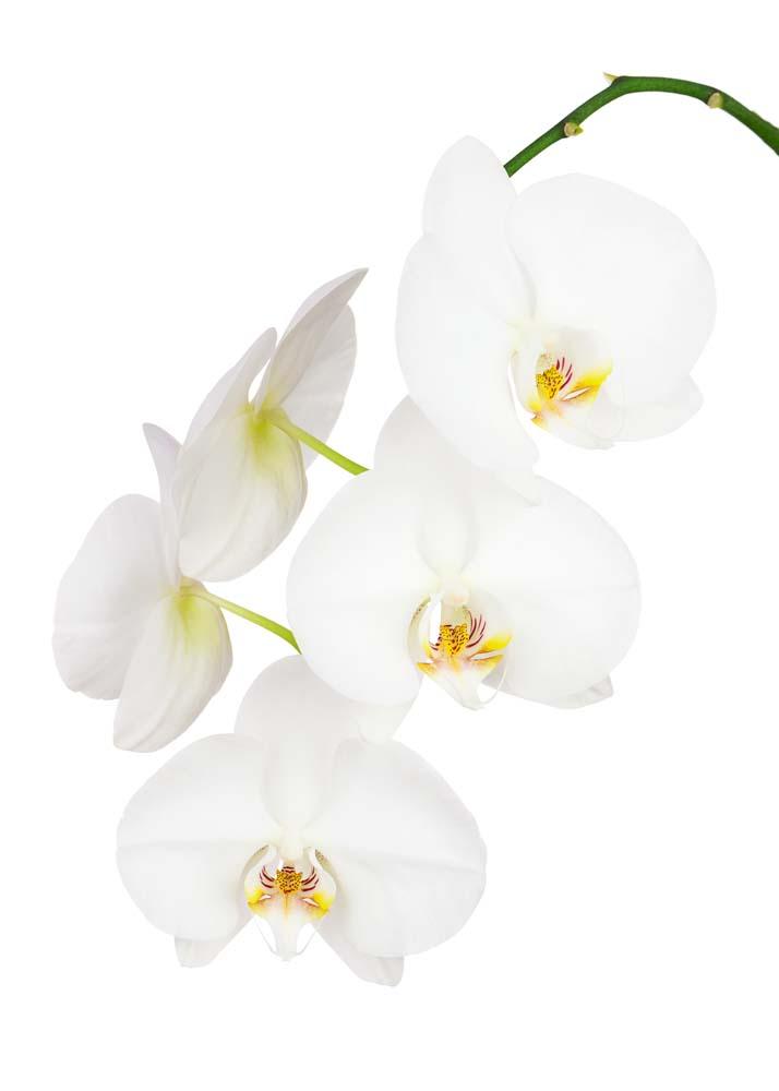 Цветы и растения - 34 | Wall-Style
