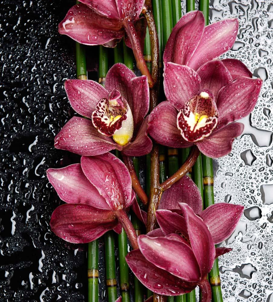 Цветы и растения - 44 | Wall-Style