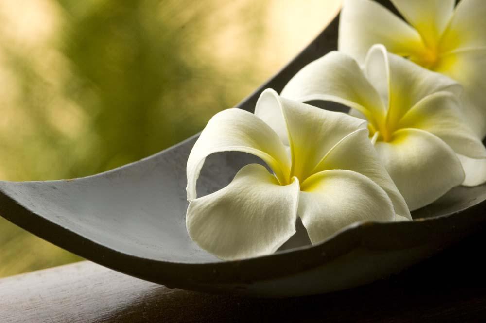 Цветы и растения - 229 | Wall-Style