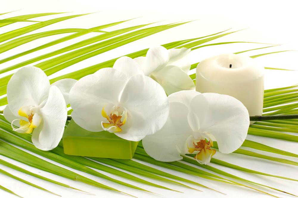 Цветы и растения - 233 | Wall-Style