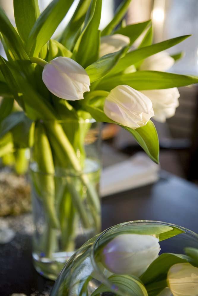Цветы и растения - 234 | Wall-Style