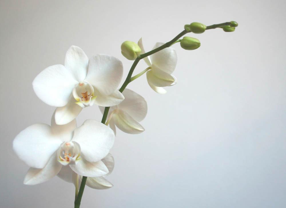 Цветы и растения - 220 | Wall-Style