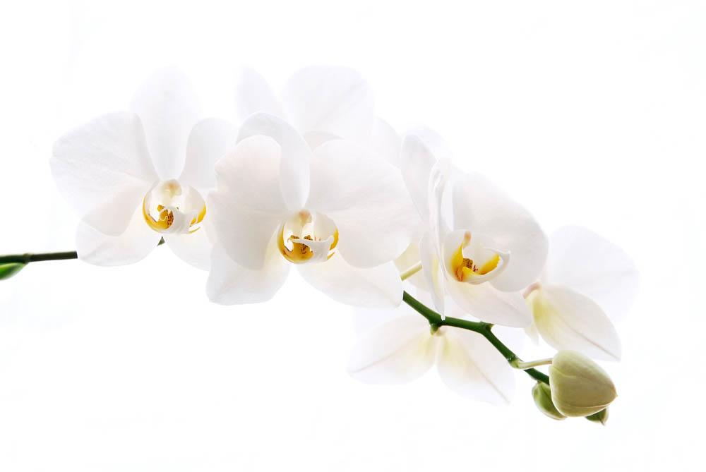 Цветы и растения - 235 | Wall-Style
