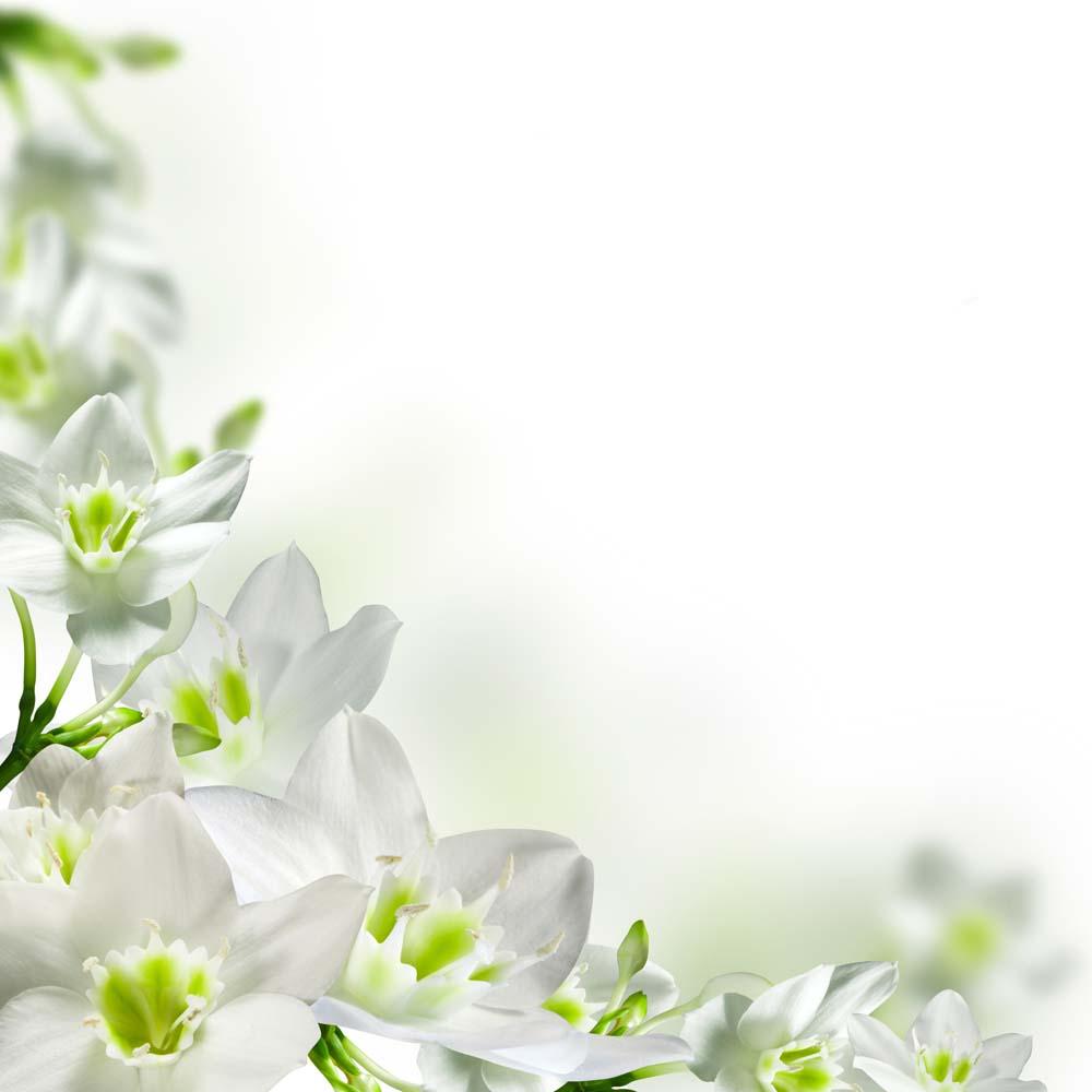 Цветы и растения - 239 | Wall-Style