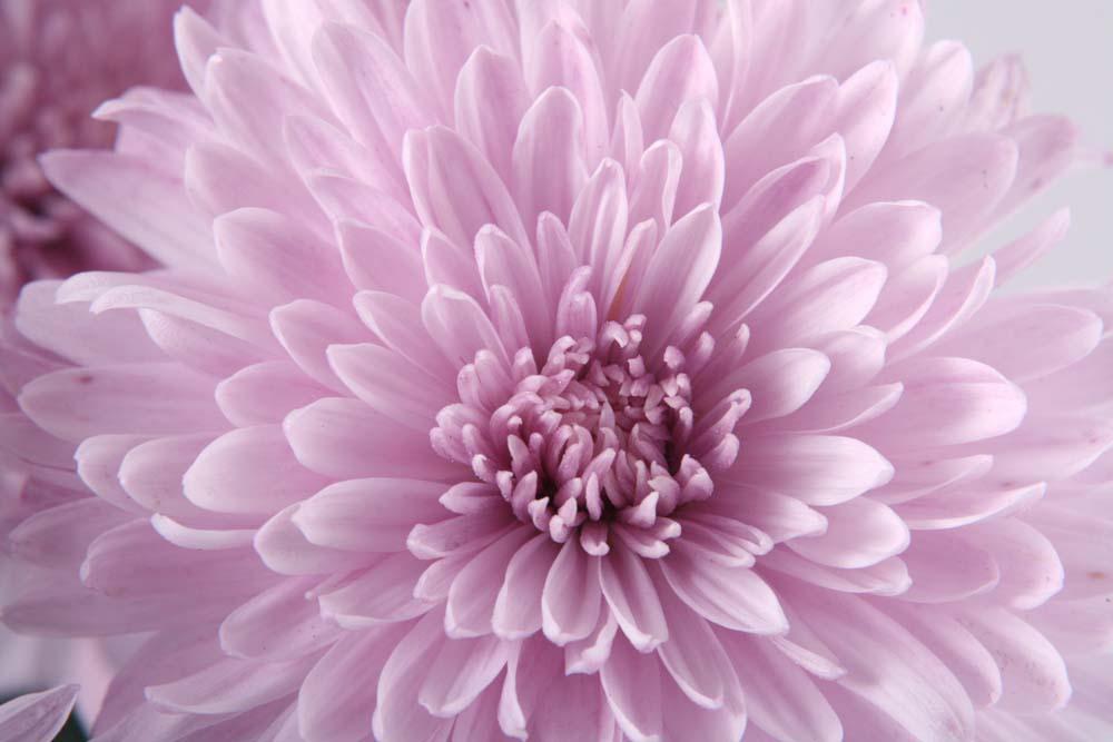 Цветы и растения - 240 | Wall-Style