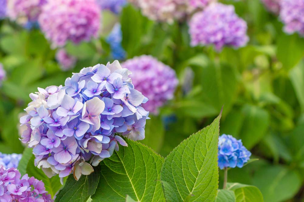 Цветы и растения - 3 | Wall-Style