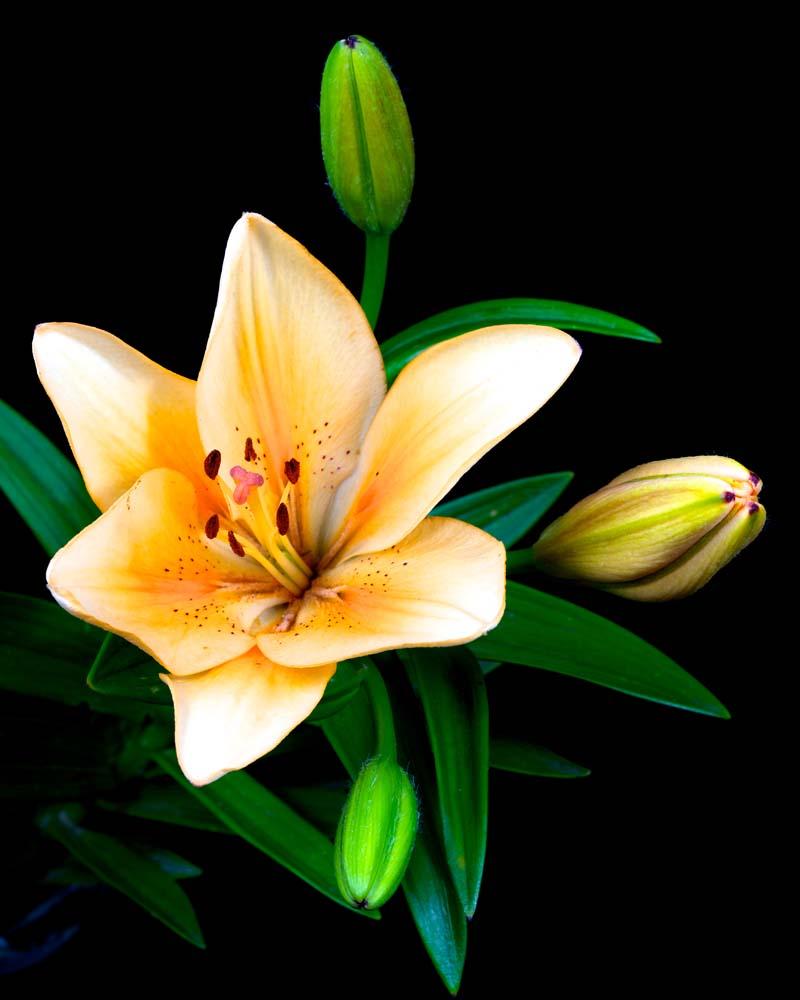 Цветы и растения - 27 | Wall-Style