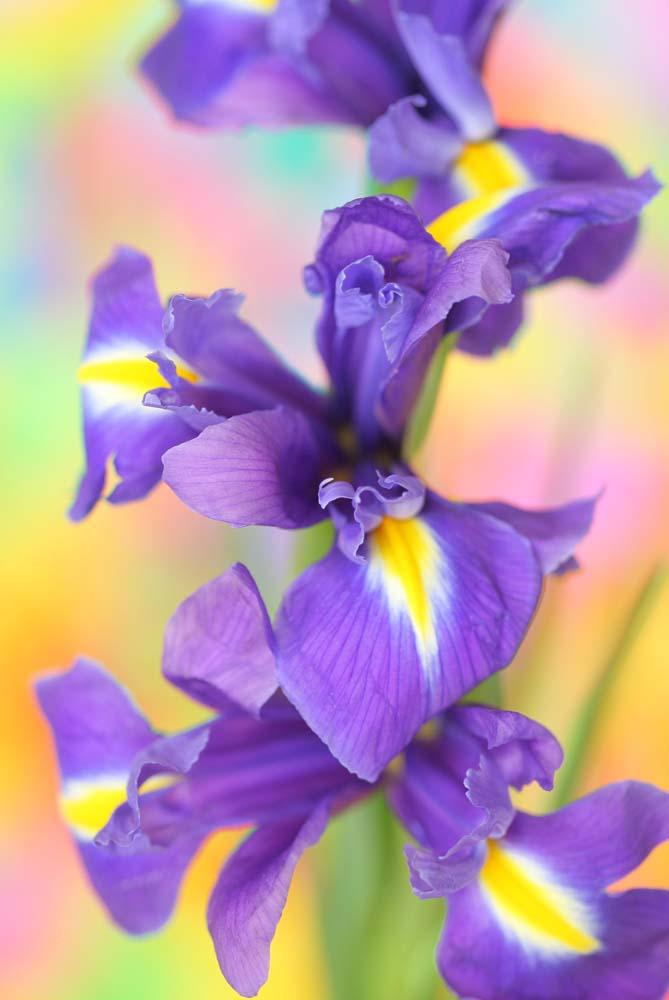 Цветы и растения - 28 | Wall-Style