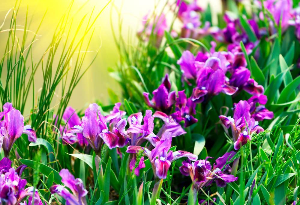 Цветы и растения - 4   Wall-Style
