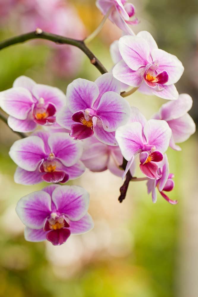 Цветы и растения - 43 | Wall-Style