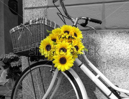Подсолнухи в корзине велосипеда