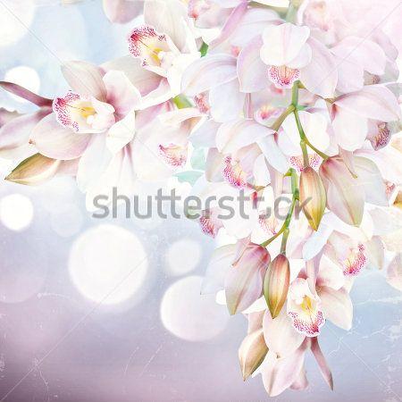 Орхидея