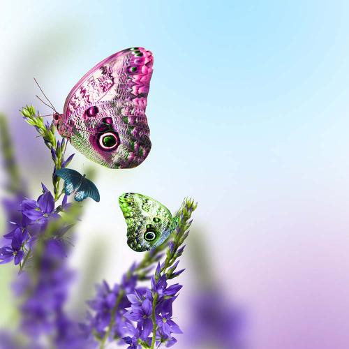 Каталог Фотообои бабочки с узором:  | Wall-Style